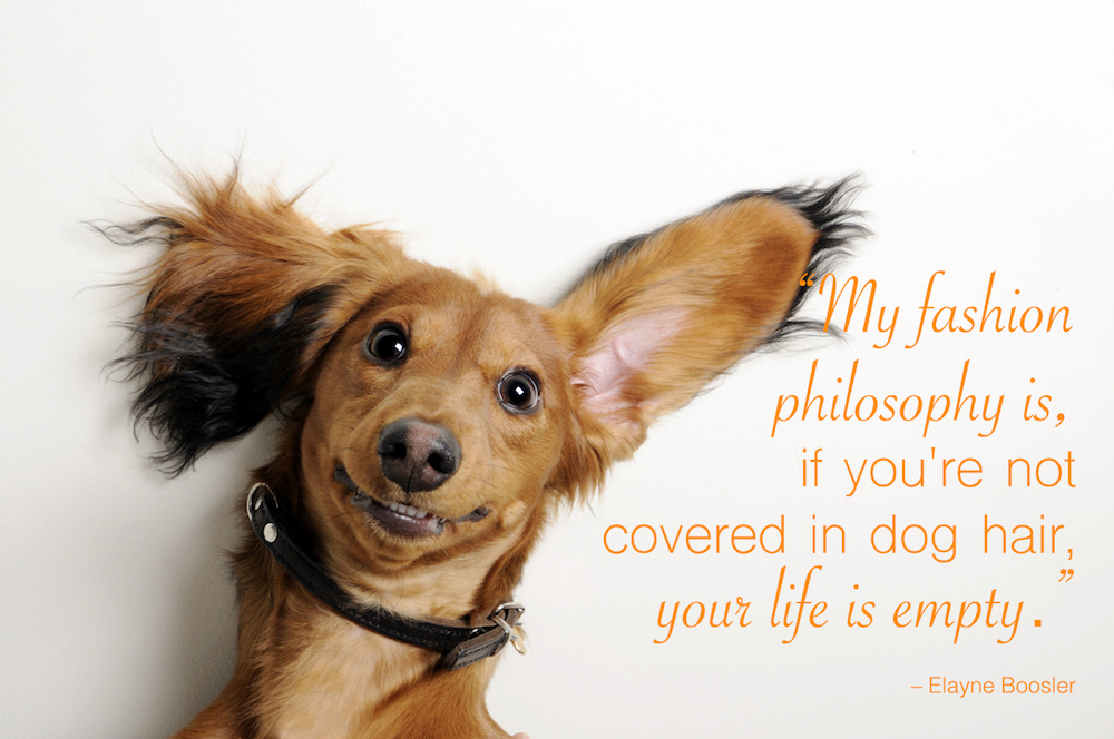 Dog with funny ears on white background. Funny dog quotes overlay