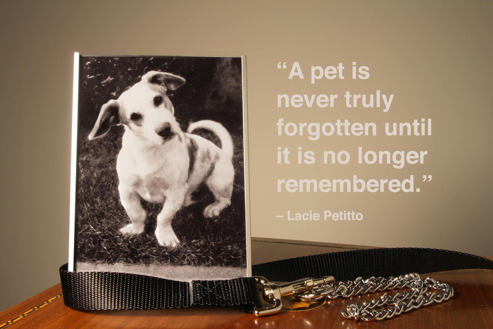 30+ Pet Loss Quotes and Words of Comfort